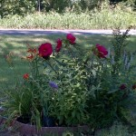 Loulou's garden
